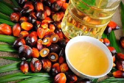 Trading Crude Palm Oil (CPO)